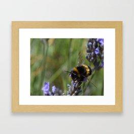 Bee & Lavender 2 Framed Art Print