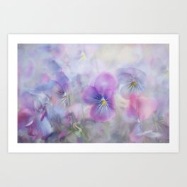 little pansies Art Print