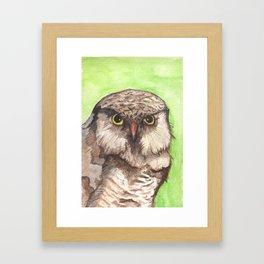 Northern Hawk Owl Framed Art Print