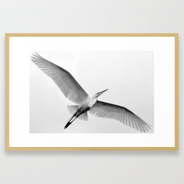 Great White Egret Framed Art Print