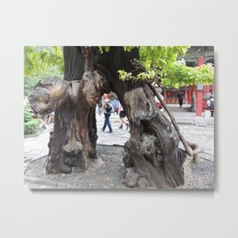 Tree in forbidden city | arbre dans la cité interdite Metal Print