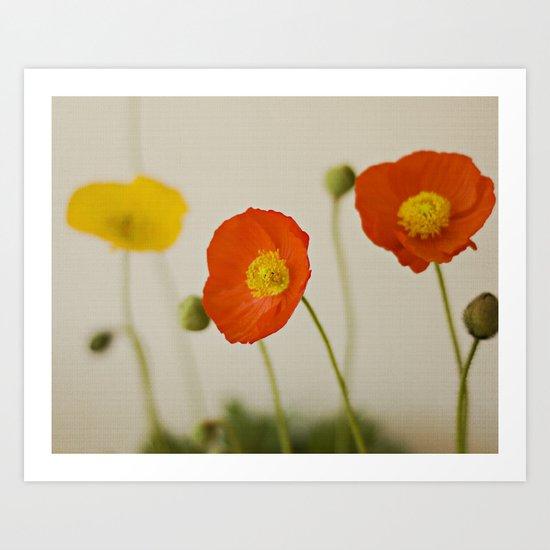 Orange Poppy Bloom Red Green Yellow Flower Art Print