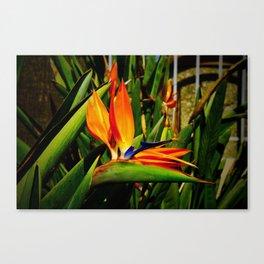 Bird of Paradise Vibrancy Canvas Print