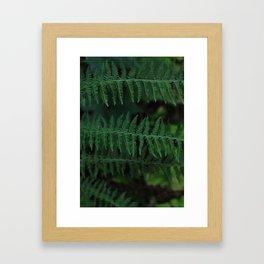 Green leaves of Christmas tree Framed Art Print