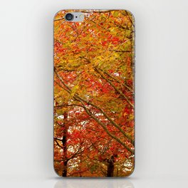 PHOTOGRAPHY / TREES 02 iPhone Skin