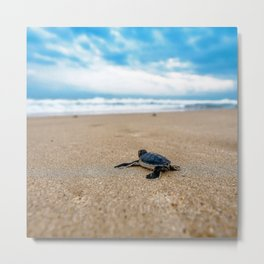 A sea turtle baby aiming at the sea Metal Print