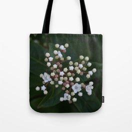 Viburnum tinus buds and flowers Tote Bag