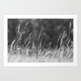 Once in a Daydream - Nature Photography Art Print
