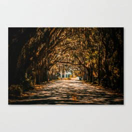 Magnolia Avenue in Fall Canvas Print