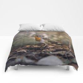 A careful look Comforters