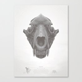Grizzly Skull Canvas Print