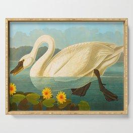 Common American Swan John James Audubon Scientific Birds Of America Illustration Serving Tray