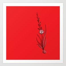 Gladiolus Flower Art Print