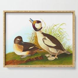 Buffel Headed Duck John James Audubon Vintage Scientific Birds Of America Illustration Serving Tray