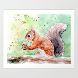 Red squirrel with walnut Art Print
