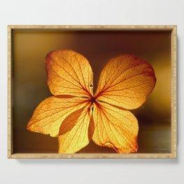 Fragile Hydrangea Flower Sunset Light Serving Tray