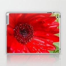 Red Gerber Daisy Laptop & iPad Skin
