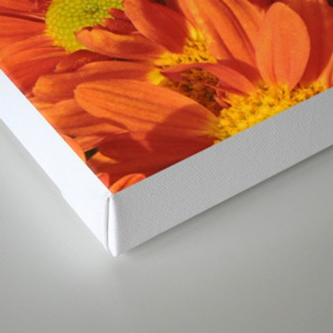 Petals a L'orange Canvas Print
