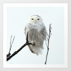 Snowy in the Wind (square) Art Print