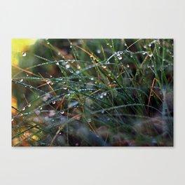 Dew Drops I Canvas Print