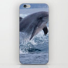 Bottenose dolphin iPhone Skin