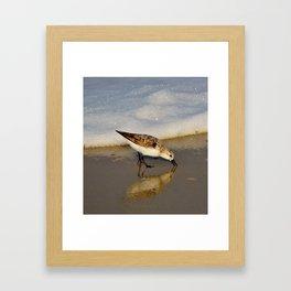 Beach Bird Framed Art Print