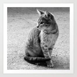 Lloyd- Black and White Cat Photography Art Print