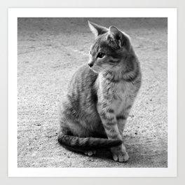 Lloyd- Black and White Cat Photography Art Print