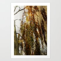 birch Art Prints featuring Birch by TakaTuka Photo