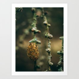 Old Tree, Young Pinecone Art Print