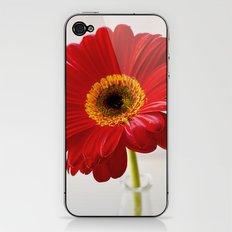 red gerbera iPhone & iPod Skin