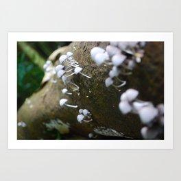 Mushroom Forest Art Print