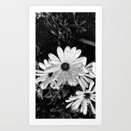 White Flower Art Print