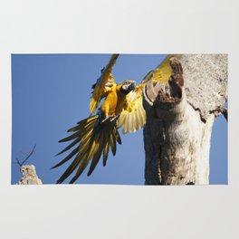 Birds from Pantanal Arara Canindé Rug