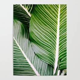 Big Leaves - Tropical Nature Photography Poster