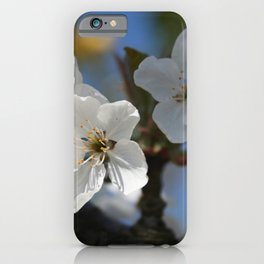 Close Up Of White Cherry Blossom Flowers iPhone Case