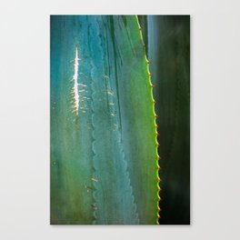 Scarred Succulent Canvas Print
