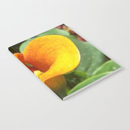 Amber Lily Notebook