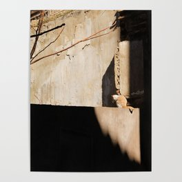 Cat in the Spanish Sun Poster