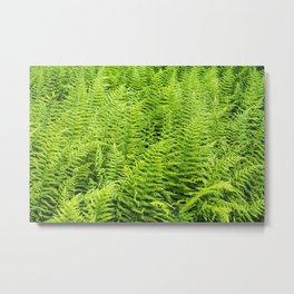 sea of ferns Metal Print