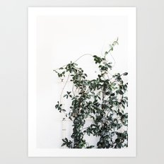 Trellis greenery Art Print