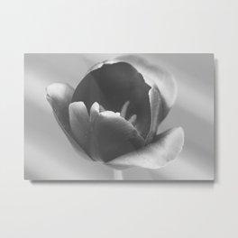 Tulip bloom black&white Metal Print