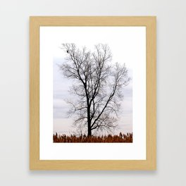 A lone bird in the wilderness Framed Art Print