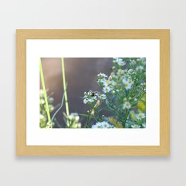 Rusty Patch Bumble Bee Framed Art Print