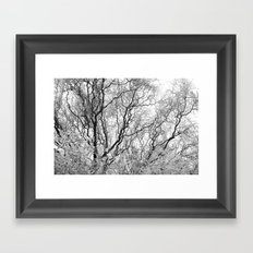 A tree and his crown in winter III Framed Art Print