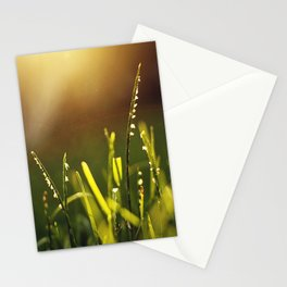 Summer Light Stationery Cards