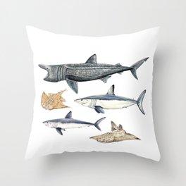 Shark diversity Throw Pillow