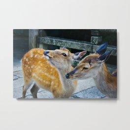 Deer in Nara Metal Print