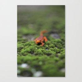 Coming For You - Orange Salamander Canvas Print