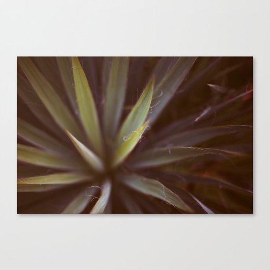 Yucca #1 Canvas Print